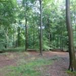 Forest Holidays: Having Fun in the Woods at Blackwood Forest